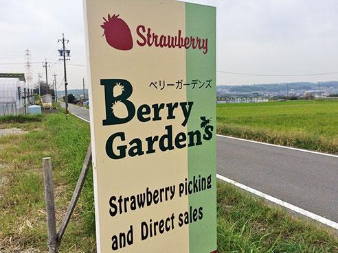 Berry Garden's