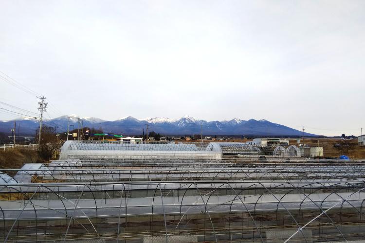 奥田農園から望む八ヶ岳